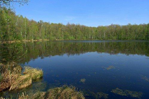 «Святовское» («Круглое») озеро у поселка Георгиевский